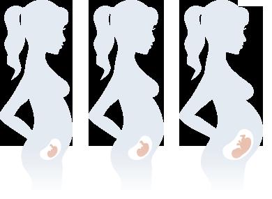 Бременност Втори триместър